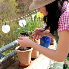 Endlich Frühling! – So machen Sie Ihren Garten fit