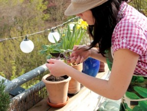 Inhalt des Artikels sind zum Frühling anstehende Gartenarbeiten.