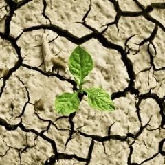 UN-Klimawandelbericht: Wo sind die Folgen am schlimmsten?