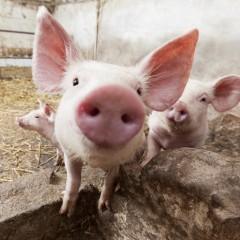 Traumferien für Kinder: Bio-Urlaub auf dem Bauernhof