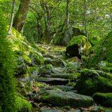 Wanderungen im Tessin – ein unvergessliches Erlebnis