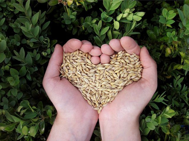 Herzschwäche entgegenwirken: Mit pflanzlicher Ernährung